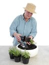 Bedding out female senior gardener wearing straw hat aspic seedlings Stock Photo