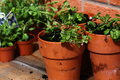 Bedding plants pot b photograph of in clay pots Stock Image