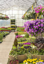 Bedding plants trays and baskets of flowering for sale in a greenhouse Royalty Free Stock Photos