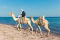 Bedouin on a camel dahab sinai january man with camels beach during safari in dahab egypt january local bedouins rely tourism to Royalty Free Stock Image