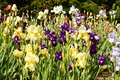 Beds Of Irises