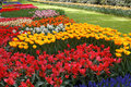 Beds of tulips in various colors Stock Photos