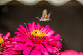 The bee above the flowers Royalty Free Stock Photo