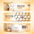 Bee banner sketch honey hive comb and flower banners set isolated vector illustration Stock Photo