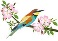 Bee eater bird sitting on wild rose branch Royalty Free Stock Photo