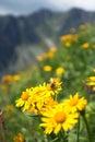 Včela na kvete