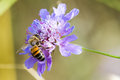 A bee in a flower in a botanic garden Stock Photo