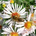Bee flowers white green nature image Royalty Free Stock Photos