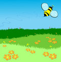 Bee flying over a green lawn Royalty Free Stock Photo