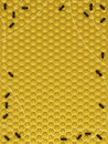 Bee hive border Royalty Free Stock Photography