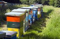 Bee hive colorful hives in the meadow Royalty Free Stock Photography