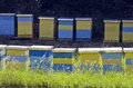 Bee hive colorful hives in the meadow Royalty Free Stock Images