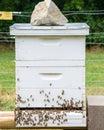 Bee Hive Royalty Free Stock Photo