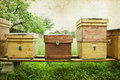 Bee hives in the field Royalty Free Stock Photo