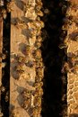 Bee hives in a garden Royalty Free Stock Photo