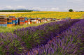 Bee Hives lining SunFlower and Lavender Fields on the Plateau De Valensole Royalty Free Stock Photo