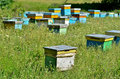 Bee hives in nature Royalty Free Stock Photography