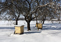 Bee hives in snowy garden. Royalty Free Stock Photo