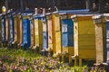 Bee hives on spring garden Royalty Free Stock Photo