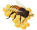 Bee On The Honey Comb