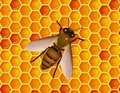 Bee with honeycomb Stock Photography