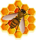 Bee with honeycomb Stock Photo