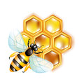 Bee on honeycomb Royalty Free Stock Image