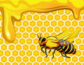 Bee with honeycomb and honey Royalty Free Stock Image