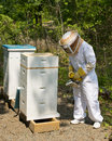 Bee keeper checking her beehives Royalty Free Stock Photo
