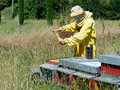 Bee keeper at work checking hives smoker to han traditional animal husbandry keeping bees Royalty Free Stock Images