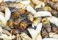 Bee larva many in bamboo basket close up Royalty Free Stock Photos