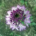Bee plant world arizona northern vegetation Stock Images