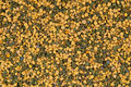 Bee pollen, background. Royalty Free Stock Photos