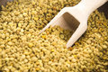 Bee pollen in wooden scoop nutritional supplement Royalty Free Stock Photo