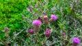 Bee sitting purple flower Royalty Free Stock Photo
