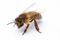 Bee a stands on an background Royalty Free Stock Photography