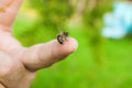 Bee stinging in the human finger of the hand. Royalty Free Stock Photo