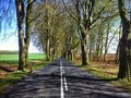 Beech alley near naclaw a scenic road polanow poland landmark of a famous road from jacinki to Stock Photo