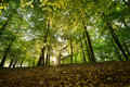 Beech forest in spring at sunset Royalty Free Stock Photo