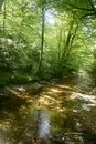 Beech forest trees with river flow under Stock Photos