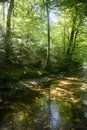 Beech forest trees with river flow under Stock Photo