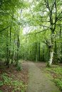 Beech green magic forest woods Royalty Free Stock Image