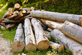 Beech logs pile of in the countryside image of deforestation Royalty Free Stock Images