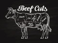 Beef cuts. template menu design for restaurant, cafe