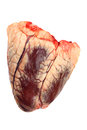 Beef heart Royalty Free Stock Photo