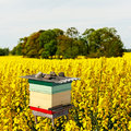 Beehive canola field danger dust Stock Images