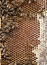 Beehive detail bees honey cells wax apiculture closeup with reflecting sunlight in Royalty Free Stock Images