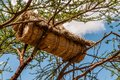 Beehive placed on the tree in ethiopia Stock Photos