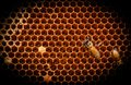 The beehive wild bee larvae are scaling honeycomb in nature Stock Photo
