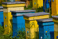 Beehives Royalty Free Stock Image